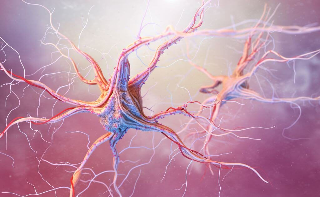 Nervous system in the human body 1 1024x630 1